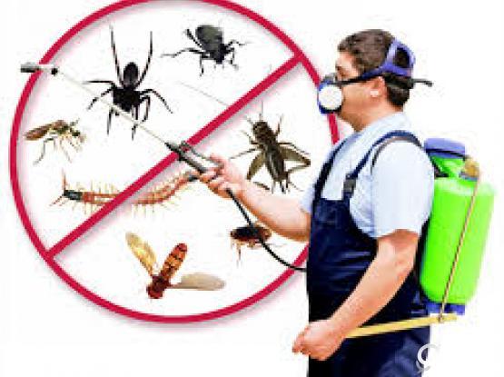 Pest control Treatment in Doha Qatar