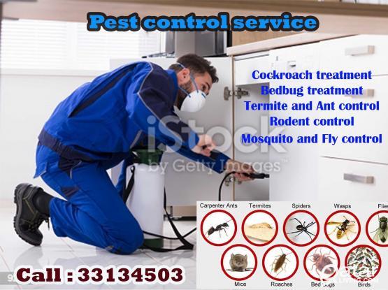 Pest control service in Qatar. Call 33134503