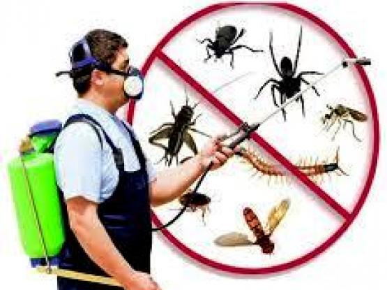 PEST COUNTROL LOW COST & CLEANING.