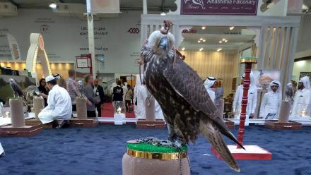 WATCH: S'hail - Katara International Hunting and Falcons Exhibition opens to visitors